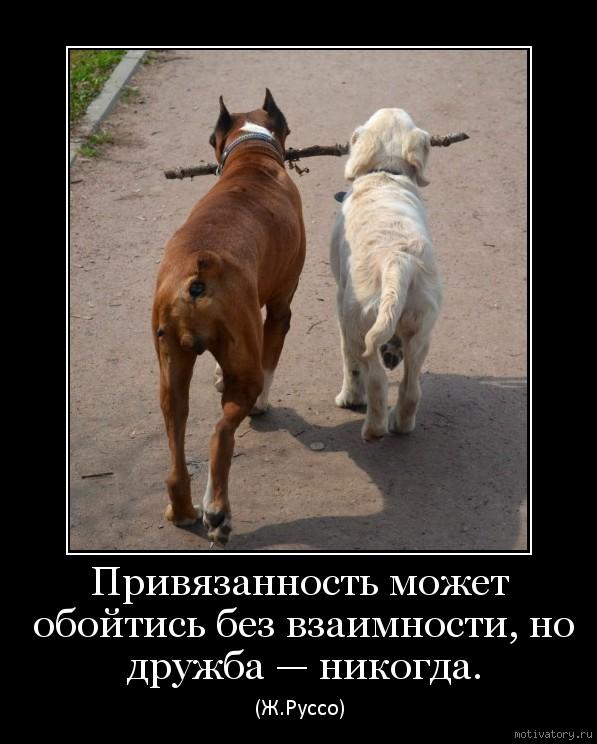 Привязанность может обойтись без взаимности, но дружба — никогда.