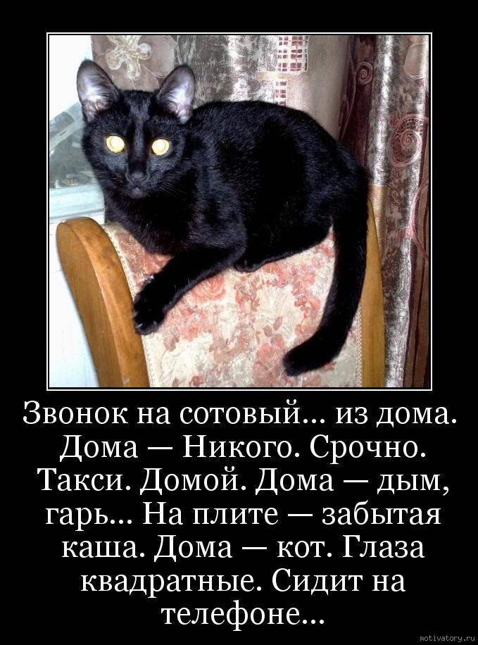 Звонок на сотовый… из дома. Дома — Никого. Срочно. Такси. Домой. Дома — дым, гарь… На плите — забытая каша. Дома — кот. Глаза квадратные. Сидит на телефоне…