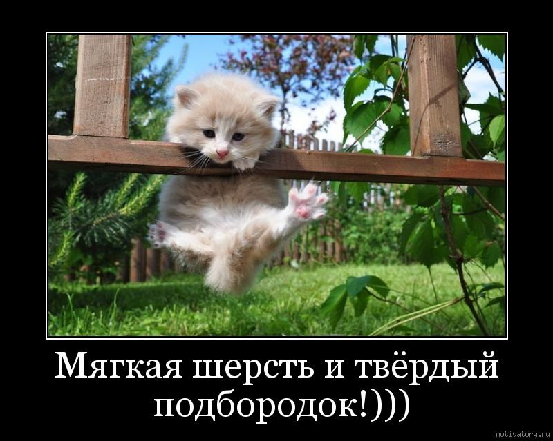 Мягкая шерсть и твёрдый подбородок!)))